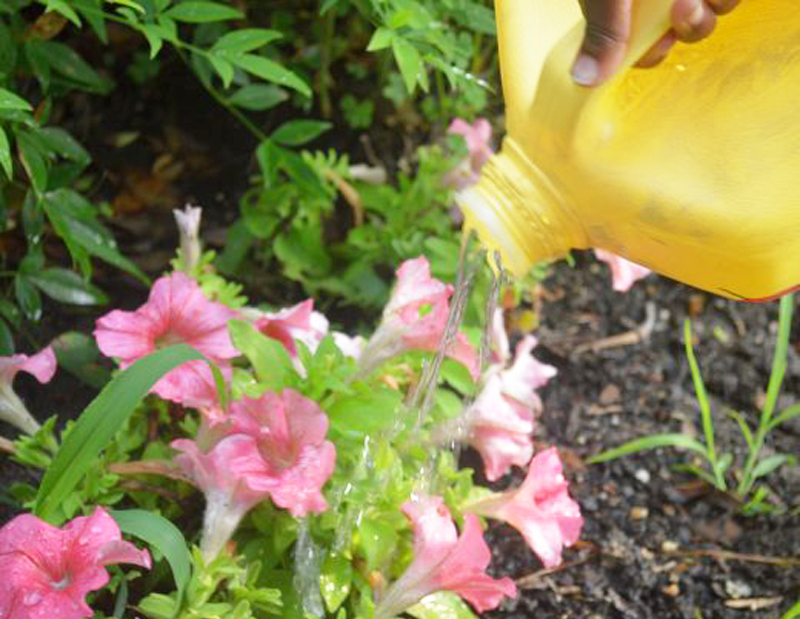 Upcycled Flower Watering Jug