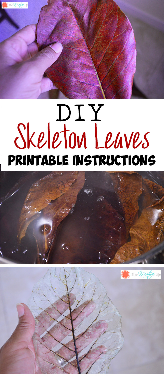 How To Make Skeleton Leaves with Free Printable Instructions - The Kreative Life