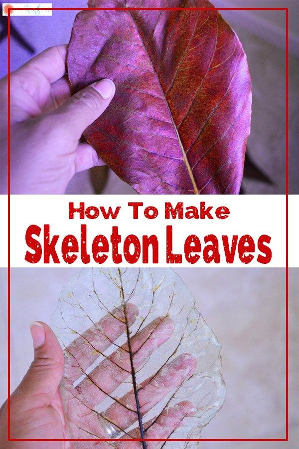 Learn how to make skeleton leaves with this easy step-by-step tutorial.