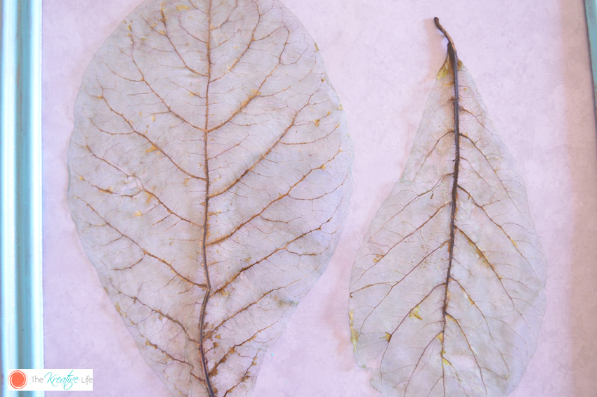 Color-Tinted Skeleton Leaves