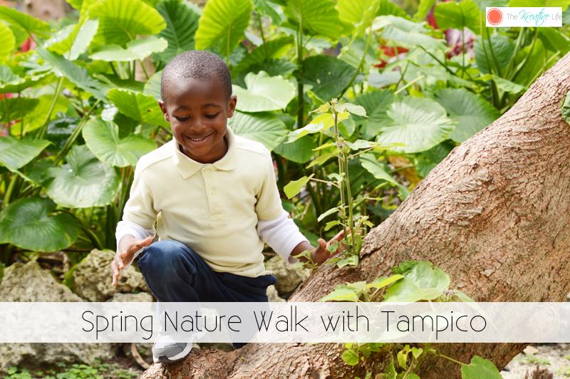 Spring Nature Walk - The Kreative Life
