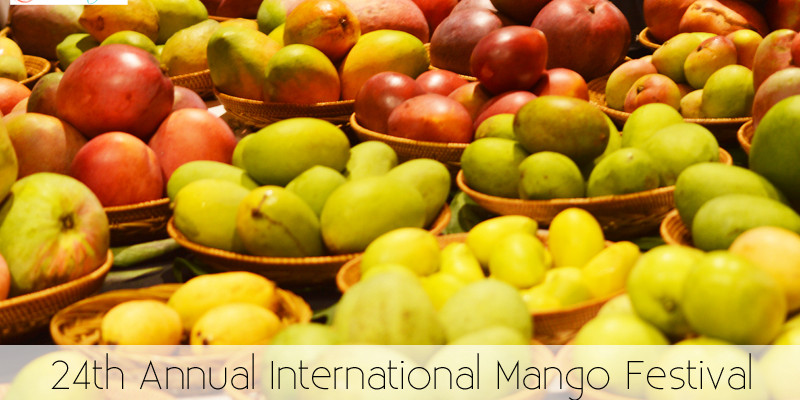Things to do in Miami - International Mango Festival - The Kreative Life